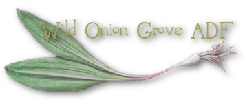 Wild Onion Grove Chicago ADF